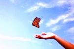 De la chenille au papillon avec EFT