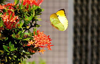 même pour le simple envol d`un papillon tout le ciel est nécessaire