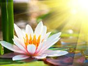 Tu es une fleur de lumière. Message de Marie au sujet du 21 décembre 2012