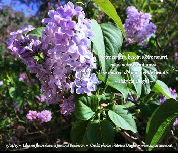 Vivre vraiment, c`est aussi prendre le temps...le temps de s`émerveiller devant la beauté d`une fleur, de s`énivrer de son délicat parfum